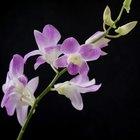 Cómo hacer un invernadero de orquídeas