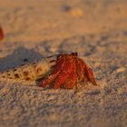 What Kind of Sand Do You Use for Hermit Crabs?