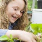 Cómo quitar la clorofila de las hojas