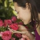 Como replantar flores cortadas