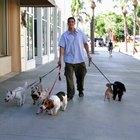 La mejor raza de perro que huele y muda poco
