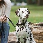 Quais as possíveis causas de manchas pretas na pele de um cão?