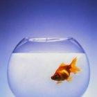 A água de aquários é boa para plantas?