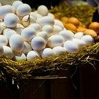 Cómo preparar claras de huevo para el desayuno