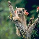 ¿Cómo hacer un árbol rascador para gatos con una estantería?