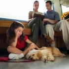 Efeitos da pós-anestesia em cães
