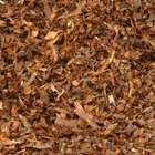 Mulch prevents weeds from growing under pine trees.