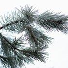 Lista de los nombres de los pinos
