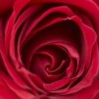 Cómo sumergir una rosa roja en un florero