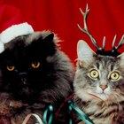 How to Stop Aggressive Cat Behavior Towards a New Cat