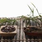 Cómo empezar otra planta de bambú de una que ya existe