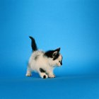 Is Coccidiosis a Kitten Illness?