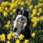 Los 10 mejores trucos de perros