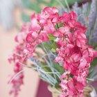 Qué clase de flores florecen todo el año