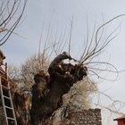 ¿Cuál es el costo promedio para remover un árbol grande?