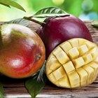 Cómo hacer jugo de mango