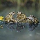 ¿Qué tipo de piel tienen los anfibios?
