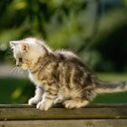 Tips to Tame Feral Kittens