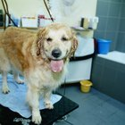 How to Get Rid of Oily Fur on Dogs