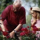 Como cuidar da planta rosário