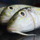 bluegill fish close up