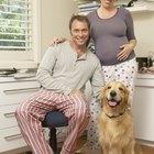 Como preparar o seu cão ou gato para a chegada de um bebê