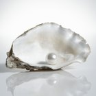 Cómo hacer una perla cultivada