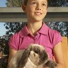 Gestación y nacimiento en conejos