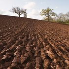 Cinco factores importantes involucrados en la formación del suelo