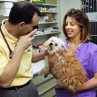 ¿Qué salario tiene un veterinario?