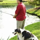 Should Dogs Drink Pond Water?