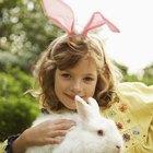 Uso de baytril em coelhos