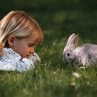 Cómo cuidar de un conejo mini rex