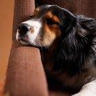 ¿Qué analgésicos de venta libre puedo darle a mi perro?
