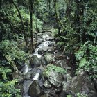List of Plants That Only Grow in the Tropical Rainforest