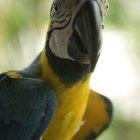 Iodine for Parrots