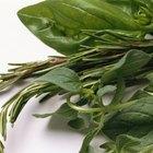 Lista de especias y hierbas comunes