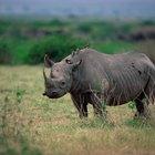 Relacionamentos simbióticos com rinocerontes