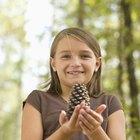 Cómo enseñar a los niños habilidades para investigar