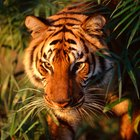 Pérdida de hábitat de animales en peligro de extinción