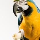 Que tipos de frutas papagaios e araras podem consumir?