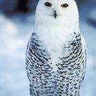 Quais são as similaridades entre aves e mamíferos?