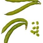 Raw Green Organic Long Beans