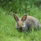 Cómo hacer abono orgánico a partir de estiércol de conejo