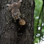 ¿El desprendimiento de corteza de las ramas lastima al árbol?