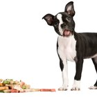 Dog Food for Dogs with Sensitivities