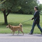 Why Dogs Are Aggressive When They Are Walked