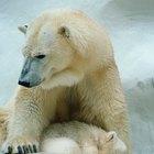 Juegos de animales de zoológico para preescolar