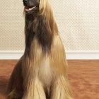 O que acontece quando a amônia da urina de cachorro é misturada com alvejante