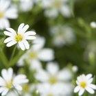 Características de las flores